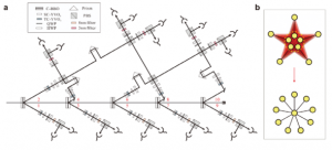 First Demonstration of 10-Photon Quantum Entanglement Sets New Record